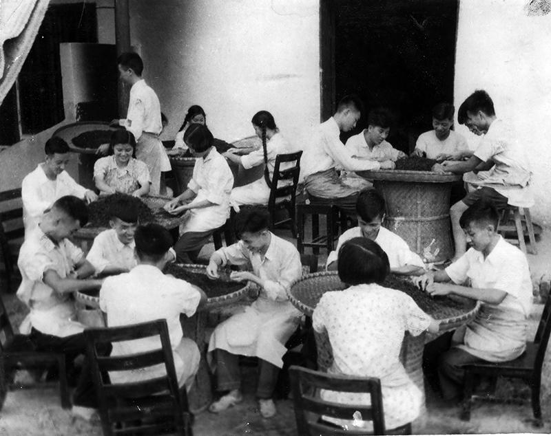 1958年茶学专业学生下茶场劳动锻炼