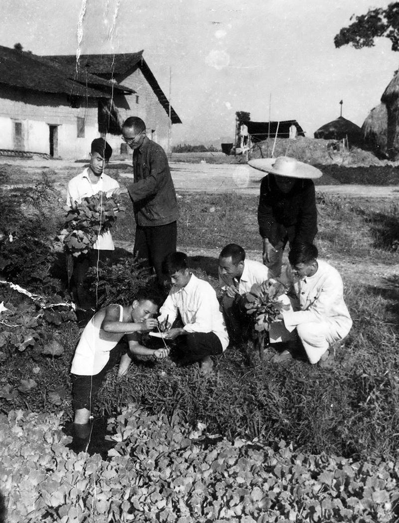 1958年李学恭教授指导畜牧专业学生饲料栽培